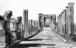 CPSM Les Ruines De Timgad   L32 - Non Classificati