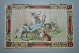 Belgique 1910? Carte Postale Chatons - Katten