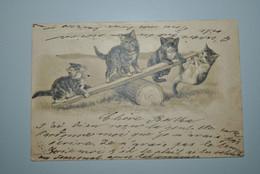 Allemagne 1901 Carte Postale Chatons - Katten
