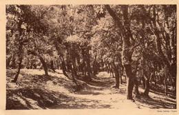 BUGEAUD - Sentier Dans La Forêt - Otras Ciudades