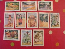 "11 Images Album Chocolat Cémoi ""album N° 4 Indochine"". Lot 427. Vers 1960. - Other"