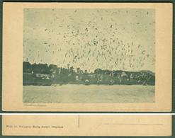 """HELGOLAND Nordsee ~1950 """" Lachmöven """" Alte Ansichtskarte Der Biolog.Anstalt Helgoland - Helgoland"""
