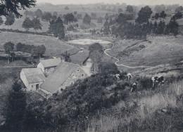 ROBERTVILLE  Vieux Moulin Pré Pâturages Vaches BELGIUM Old Mill Cows Pasture - Waimes - Weismes