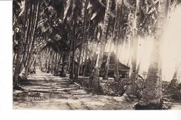 CPA Old Pc Singapore Palm Tree Sreet Photo - Singapur