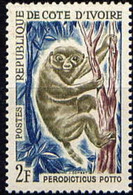 COTE D'IVOIRE - Potto (Perodicticus Potto) - Other