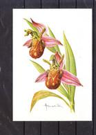 2244  Buzin - Fleur - Ophrys Abeille - 1985-.. Pájaros (Buzin)