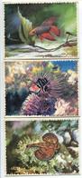 LOT 15 IMAGES 9,50 X 13 Cm REINETTE Poissons Des Tropiques Prédécoupés - Animales