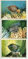 LOT 5 IMAGES 9,50 X 13 Cm REINETTE Poissons Des Tropiques Prédécoupés - Années 1950 - Animales
