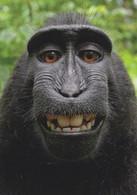 Funny Face Monkey Witzigger Affe Ape Comic German Animal Postcard - Apen