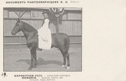 EXPO 1900 NONIUS  Etalon Race Nomius - Paarden