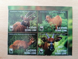 177 WWF Bongo (Le 3900) - Sierra Leone (1961-...)