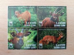 177 WWF Bongo (Le 4300) - Sierra Leone (1961-...)