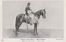RACE ARABE Etalon Pur Sang - Paarden