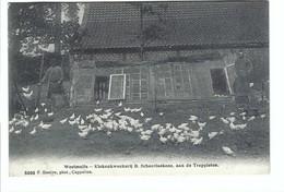 Westmalle - Kiekenkweekerij B Schaerlakens, Aan De Trappisten  5098 F Hoelen,phot ,Cappellen  1914 - Malle