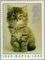 Grande Bretagne - Chaton (Felis Silvestris Catus) - Gatos Domésticos