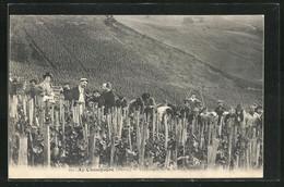 CPA Ay-Champagne, Vendanges De La Maison Massing, Landarbeiter Bei Der Weinlese - Ay En Champagne