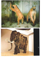 Schweiz - 2 Cards - Basel - Naturhistorisches Museum - Chalicotherium Jungtertiär - Mammut - Prehistoric - BS Bâle-Ville