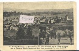 Les Franches Montagnes - SAIGNELEGIER - JU Jura