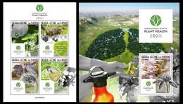 Sierra Leone. 2020 International Year Of Plant Health. (605ab) OFFICIAL ISSUE - Ohne Zuordnung