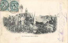 CPA 33 Gironde Pauillac Les Vendanges Dans Le Médoc - Attelage Boeufs - Vignes - Vignerons - Vin - Pauillac