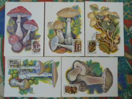 Carte Maximum Card (x5) Champignons Mushrooms URSS (ref 86646) - Mushrooms