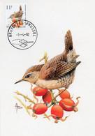 BUZIN N° 2449  Troglodyte Mignon - 1991-2000
