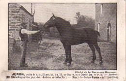 S47-004 Juron, Poulain De Trait Breton - Appartient à MM. Abhervé-Guéguen Frères à Kerlaviou En Guiclan - 1911 - Otros Municipios