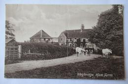Weybridge, Ham Farm - Surrey - Cows - Vaches - Surrey