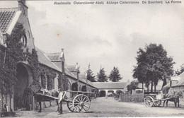 Westmalle, Cisterciënzer Abdij, De Boerderij (pk74287) - Malle