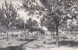Westmalle, Cisterciënzer Abdij, Kippenhok (pk74288) - Malle
