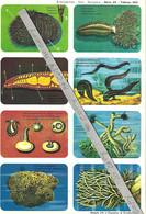 Planche Didactique Hemma - Echinodermes - Vers - Spongieux Série 39 Tableau 283 - Animaux