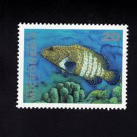 1137509365 MICRONESIA POSTFRIS MINT NEVER HINGED POSTFRISCH EINWANDFREI  SCOTT 158 FISH - Micronesia
