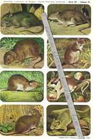 Planche Didactique Hemma - Mammifères : Les Insectivores, Les Rongeurs - Série 39 - Tableau 51 - Animaux