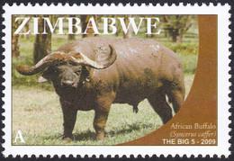 ZIMBABWE, 2009, Animaux (faune) | Buffles | Mammifères - Vaches