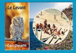 RARE Ile Du Levant - Hibou Petit Duc - Plage Des Grottes Groupe De Naturistes - Unclassified