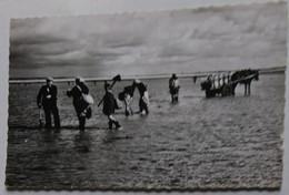 50 Manche CPSM Coutainville La Pêche Aux Praires 1958 - Otros Municipios