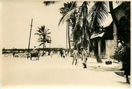 231120A - PHOTO Années 1920 - TANZANIE ZANZIBAR Palmier Allée - Tanzania
