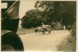 231120A - PHOTO Années 1920 - TANZANIE ZANZIBAR Attelage Boeuf Vache - Tanzania