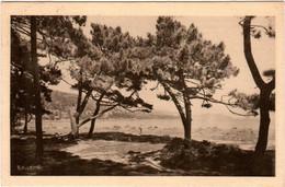 3OMST 411. LE LAVANDOU - SAINT CLAIR PROMENADE D'ETE - Le Lavandou