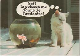 LD61 : Humour : Chat - Poisson , Bof! - Humor