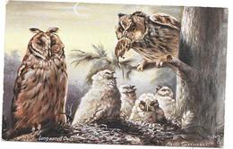 CPA. ILLUSTRATEUR   RAPHAEL TUCK  LES BIRDS .OILETTE ..MAUDE SERIVENER  .LONG EARED OWIS.N°9294... TBE SCAN - Tuck, Raphael