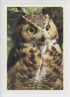 Hibou (cp Vierge N°196 Collection Vie Sauvage 2è Série) - Birds
