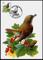Cartes Maximum / Maximumkaart - BUZIN - Rossignol Philomèle / Nachtegaal / Nachtigall / Nightingale - 2001-2010