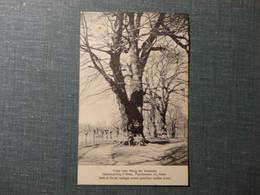 Unter Dem König Der Kastanien - Verlagsbuchhandlung Ceresio Magliaso - Foto Schmidhauser Eugen 1931 (3735) - TI Tessin