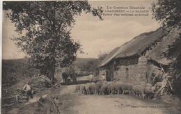 19 CHAMBERET  - Le MAZAUD  Retour D'un Troupeau Au Bercail - Andere Gemeenten