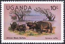 OUGANDA, 1979,     Animaux (faune) | Mammifères | Buffles - Gibier
