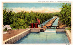 Hawaii  Sugar Cane  Fields - Andere