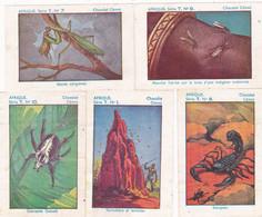 Chromo - Image : 5 Images : Chocolat CEMOI : N° 1 - 7 - 8 - 9 - 10 : Série T  : Afrique : - Sin Clasificación