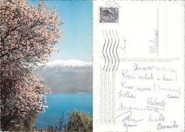 Lago Di Garda. Mandorli In Fiore E Monte Baldo. Viaggiata 1961 - Non Classés