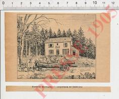 (avec Défaut) Petite Gravure De 1905 Forêt De Mortagne (Vosges) Attelage De Boeufs Débardage Transport Du Bois 231V - Unclassified